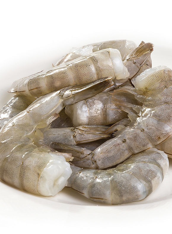 Whiteleg shrimp