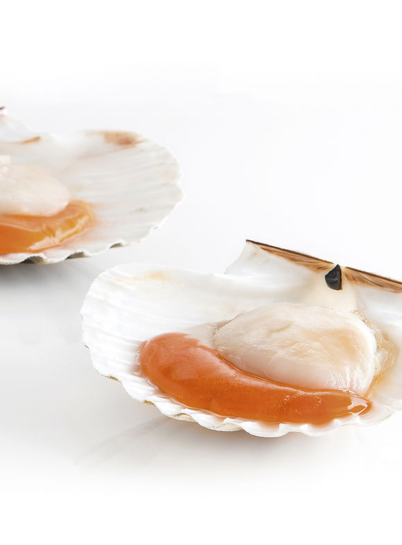 King scallop half shell