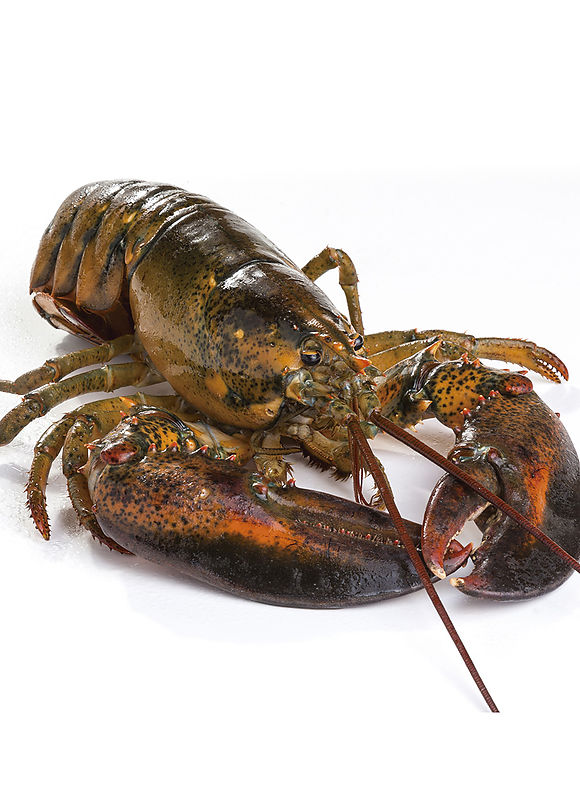 Raw canadian lobster